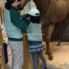 ホースパーク(厩務員・馬の世話・JRA)