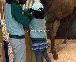 キッザニア甲子園ホースパーク きゅう務員 ウマのエサやり 世話