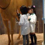 キッザニア甲子園 ホースパーク 獣医師 馬のお医者さん